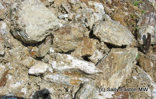 Leitha Hills soils