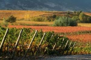 Los Lingues vineyard