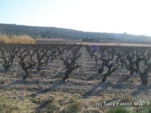 South-facing Aupilhac vineyard