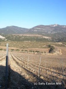 North-facing Cocalières vineyard