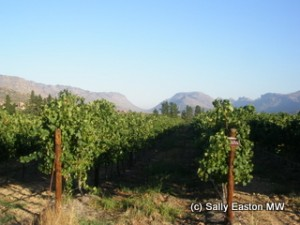 Cederberg vineyards