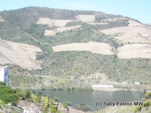 Dry Douro vineyards