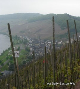 Vineyards above Ürzig
