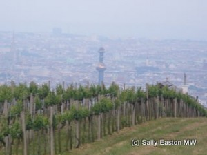 Vineyards over Vienna