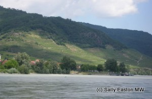 Steep Wachau slopes