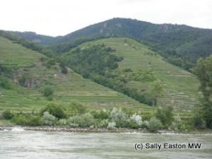 Wachau vineyards close to river Danube