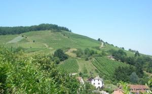 Hillsides for the best vineyards