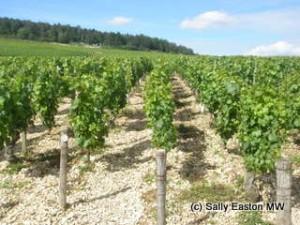 Prime Chablis vineyards