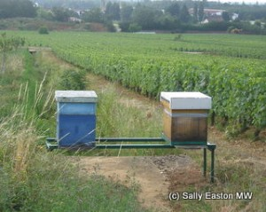Beehives in Burgundy