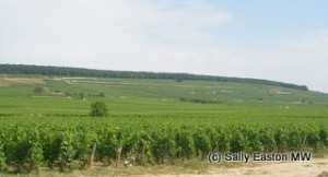 Hill of Corton