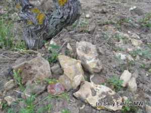 Flint in Clos du Mosny