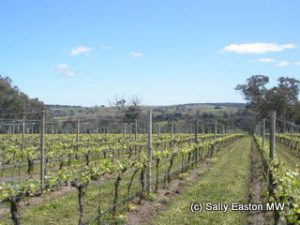Castagna's vineyards