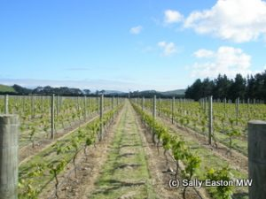 Martinborough
