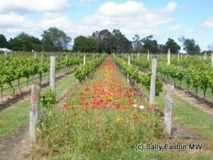 Colourful cover crops
