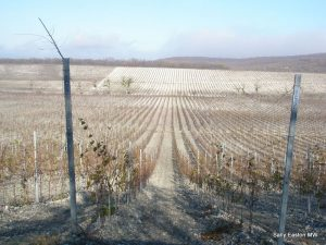 Recent vineyard investment on the Black Sea