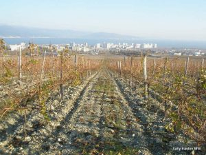 Vineyards overlooking Novorossiysk on the Black Sea