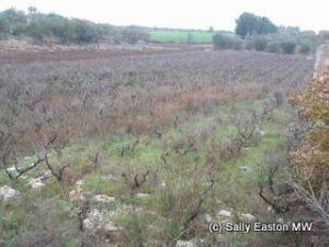 Old primitivo, Itria valley