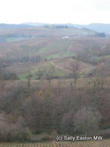 Rolling Beaujolais hills