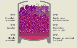 Semi-carbonic maceration