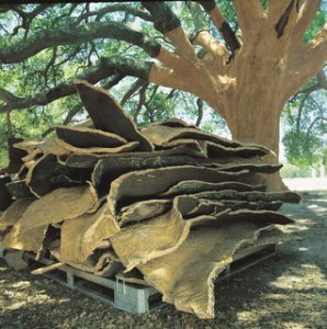 Cork harvested from cork oak tree