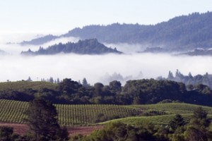 Sonoma fog blanket