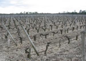 Bordeaux soils