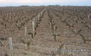 Pauillac vineyards